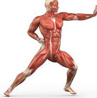 Quali sono I Benefici nell'Aumentare il Livello di Difficoltà degli Esercizi.